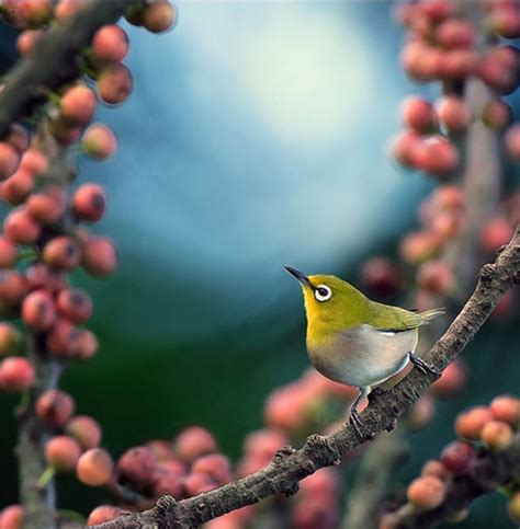 beautiful birds phots beautiful world most colorful birds photos