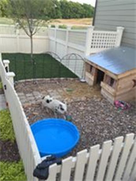 mini pot belly pig outdoor housing 47 best indoor housing exles images on