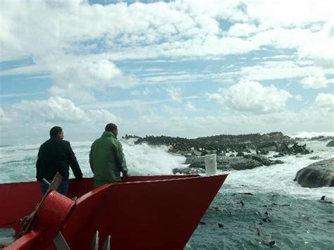 distances by boat seals picture of duiker island hout bay tripadvisor