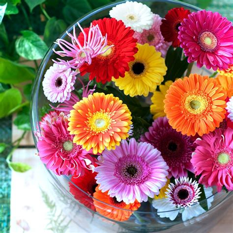 Water Vases Decorum Company Gerbera Germini Growers Growers