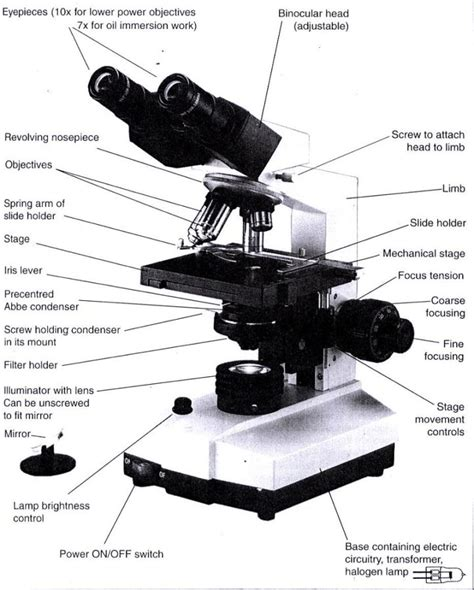 diagram of microscope diagrams of microscope diagram site