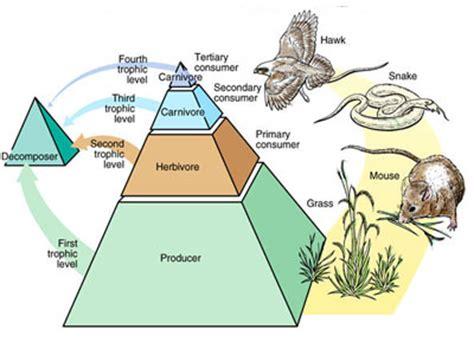 Which Animal Occupies A Rainforest Floor Niche - ecosystem kullabs
