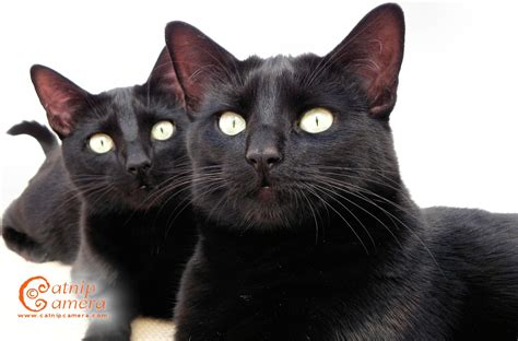desktop wallpaper black cats black cat 36 hd wallpaper hdblackwallpaper
