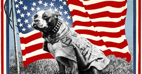 Sgt Stubby Breed Meet Sergeant Stubby The Most Decorated War In History The Dogington Post