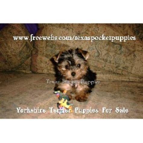 yorkie rescue fort worth terrier yorkie breeders in freedoglistings