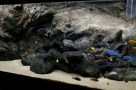 mbuna aquascape aquascape idea lake malawi mbuna pinterest ideas