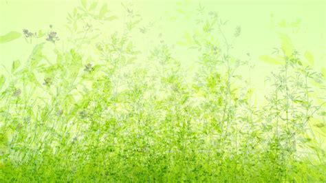 imagenes verdes naturales verde y fondos naturales 4 11 1366x768 fondos de