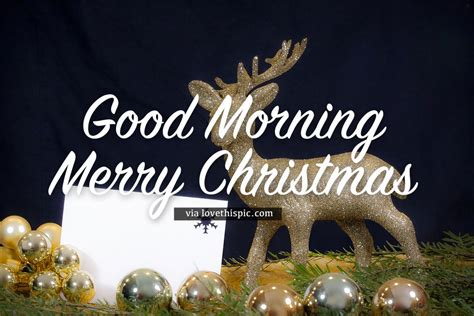 gold glitter good morning merry christmas quote pictures   images  facebook