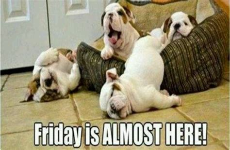 Friday Dog Meme - top friday funny puppy wallpapers