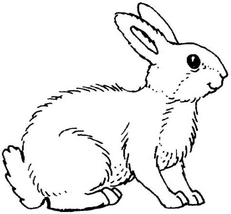 Coloriages Lapin Les Animaux Page 2 Coloriages Coloriage Animaux Coloriage Animaux Domestiques L