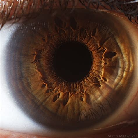the photographers eye a photographer of the day suren manvelyan captures beautiful eyes in macro resource