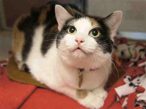 adopt a denver denver dumb friends league special adopt a cat for 10 photos huffpost