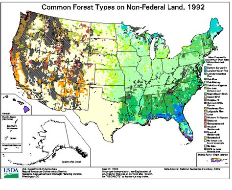 forest map of usa maps of common united states forest cover types