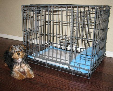 how to potty a yorkie to go outside 17 best images about house on new jersey and playpen