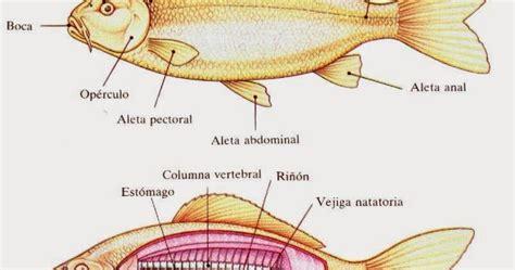 los peces de la 8483835460 objetivos fisiologia de un pez
