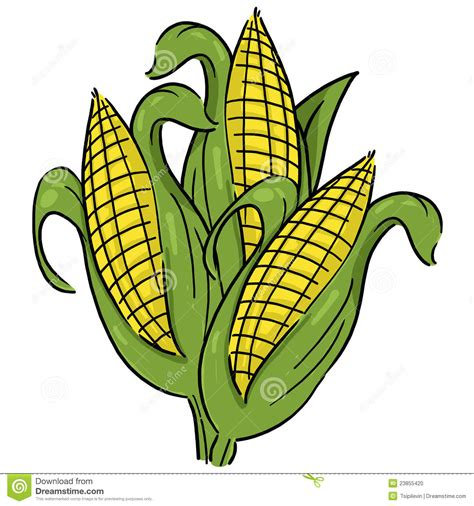 picture illustration ears of corn illustration stock illustration image of