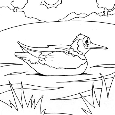 coloring pages of water birds water bird colouring