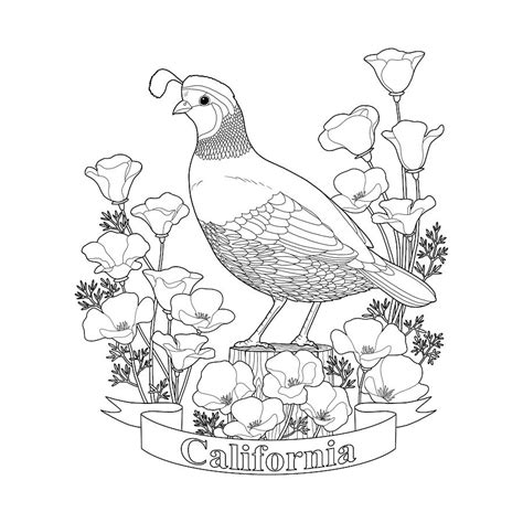 california coloring pages california state bird and flower coloring page digital