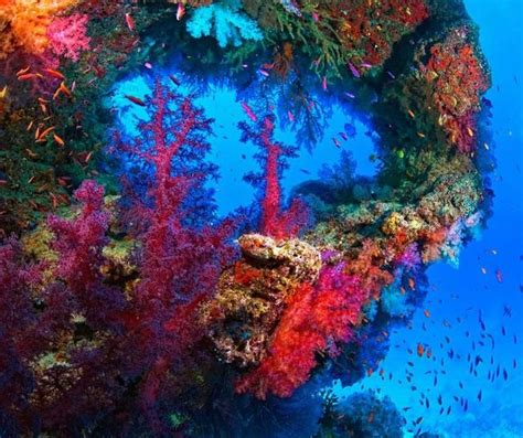 coral reef color slam wonders of the sea