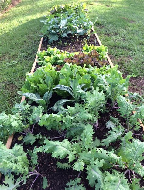 fall vegetable garden harvesting tips for extending your fall vegetable garden