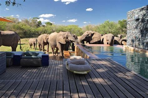 the ultimate romance of africa safari andbeyond andbeyond phinda homestead phinda private game reserve