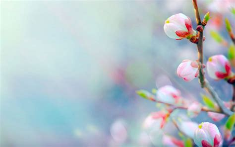 windows background themes spring windows 10 spring wallpaper wallpapersafari