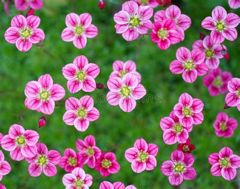 Pink Small Flowers small pink flowers stock photo image of pattern