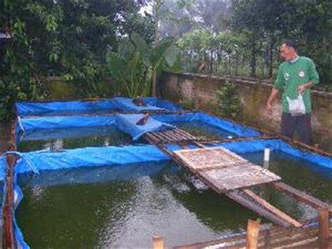 Bibit Lele Banjarnegara pertenakan lele sangkuriang petani lele purwanegara siap