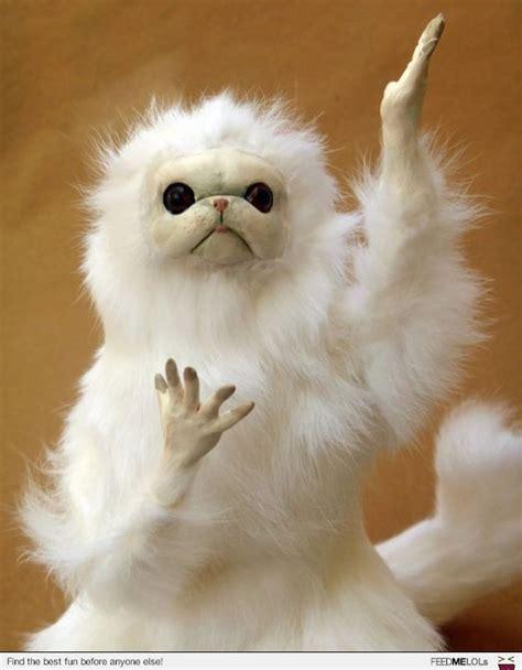 White Cat Meme - 12 persian cat room guardian memes