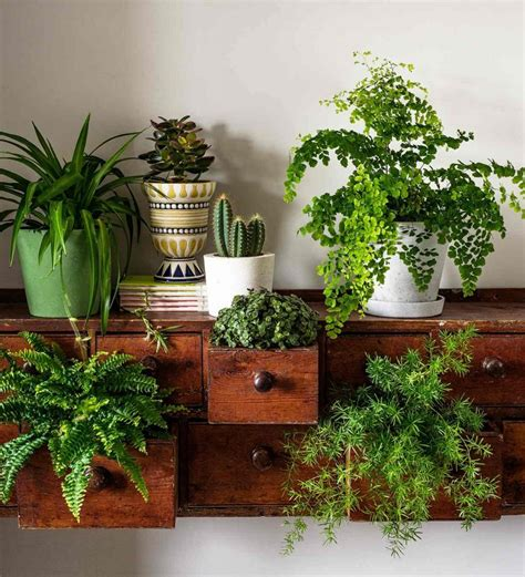 how to decorate with plants homegoods project