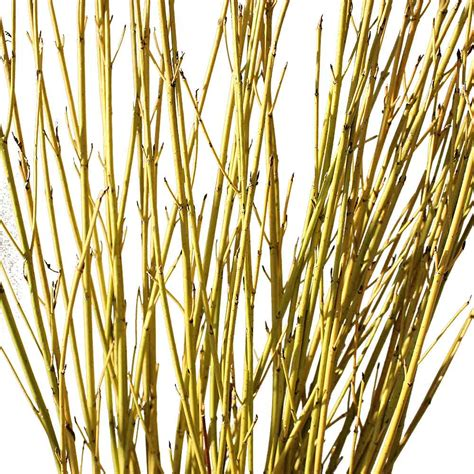 Decorative Sticks For The Home Decorative Branches Yellow Dogwood Branches