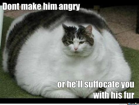 Fat Cat Meme - don t make him angry funny fat cat picture