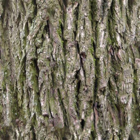 bark color 28 images 35 useful free tree bark texture