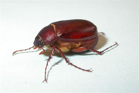 what didn t kill me let s talk about june bugs