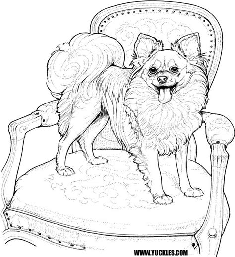 pomeranian coloring page by yuckles
