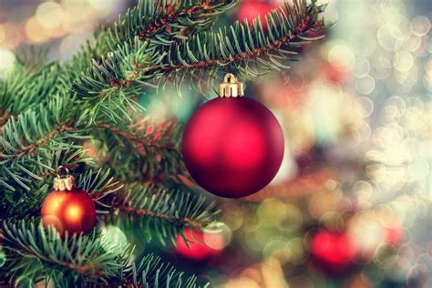 environmentally friendly ways to get rid of your christmas