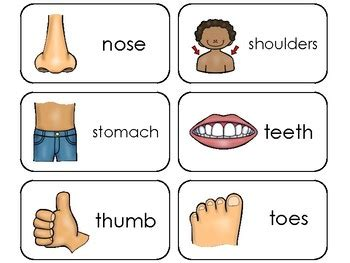 printable body part flashcards for toddlers parts of my body printable flashcards preschool health