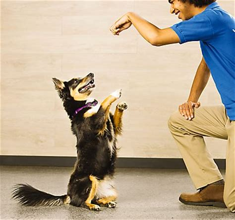 petsmart puppy school new puppy how to introduce other dogs petsmart