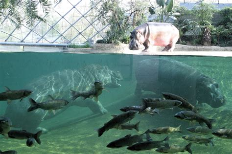 Zoologischer Garten Event by Zoo Berlin Herzlich Willkommen Im Zoo Berlin Ihre