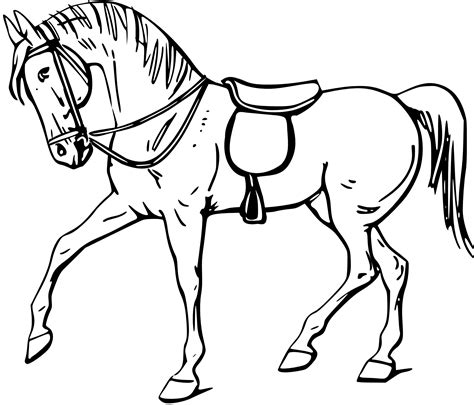 Horse Outline Clip Art Black And White Sketch Coloring Page sketch template