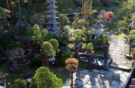 giardini bonsai armando dal col bonsai