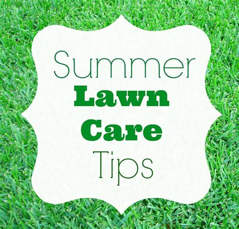 summer lawn care tips homes com