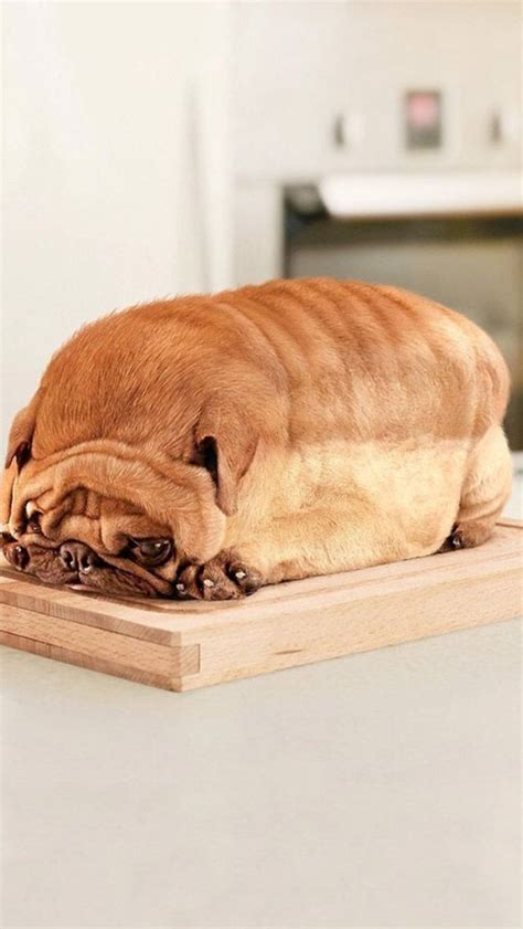 pug bread loaf that looks like pug that looks like a loaf of bread car tuning pug that looks like a loaf of bread animals