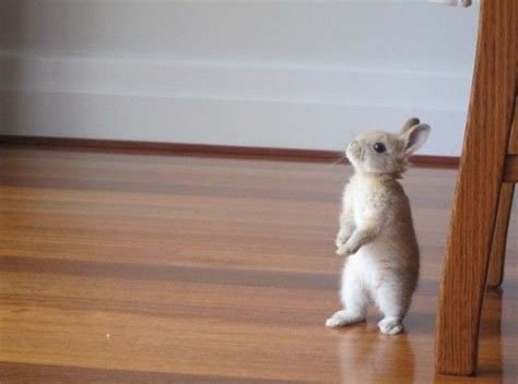like a bunny this little bunny looks like peter rabbit imgur