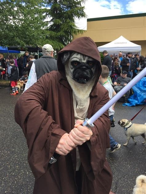 pug wars pugs gather for wars themed pug parade and it s awesome