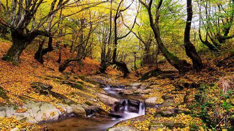 wonderful autumn landscape forest trees stream fallen
