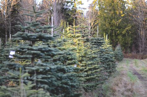 gallery of christmas tree farms in utah fabulous homes