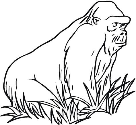 gorilla outline coloring page free gorilla coloring pages