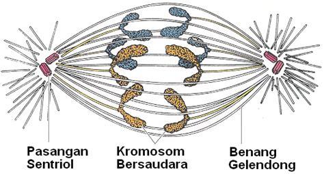 Biologi Sel Edisi 7 biologi berbagi pembelahan sel