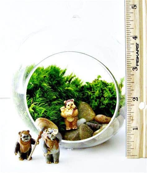 star wars cube terrarium with vintage ewok figurine live